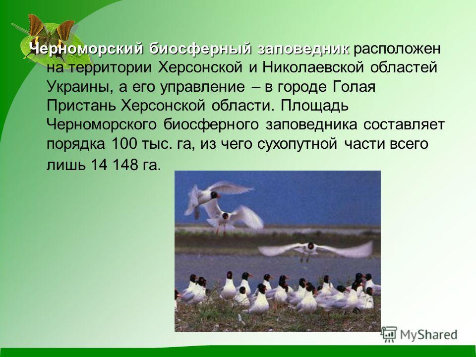 Черноморский биосферный заповедник Черноморский биосферный заповедник расположен на территории Херсонской и Николаевской областей Украины, а его управление – в городе Голая Пристань Херсонской области. Площадь Черноморского биосферного заповедника со