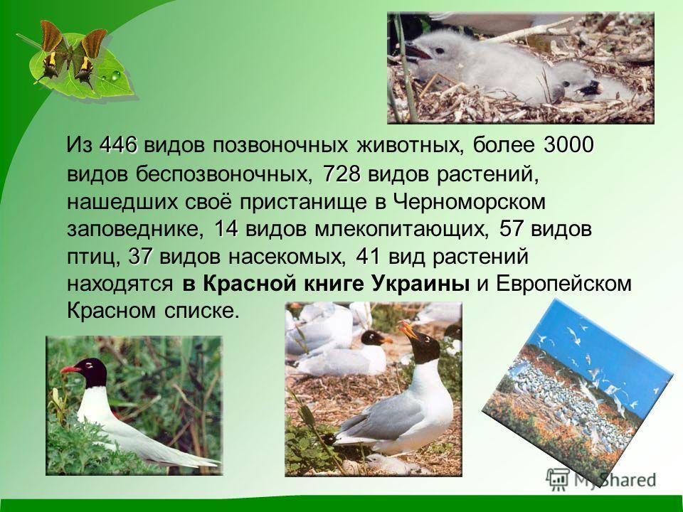 4463000 728 1457 3741 Из 446 видов позвоночных животных, более 3000 видов беспозвоночных, 728 видов растений, нашедших своё пристанище в Черноморском заповеднике, 14 видов млекопитающих, 57 видов птиц, 37 видов насекомых, 41 вид растений находятся в