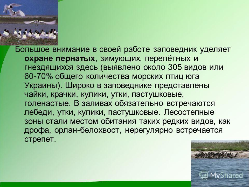 Большое внимание в своей работе заповедник уделяет охране пернатых, зимующих, перелётных и гнездящихся здесь (выявлено около 305 видов или 60-70% общего количества морских птиц юга Украины). Широко в заповеднике представлены чайки, крачки, кулики, ут