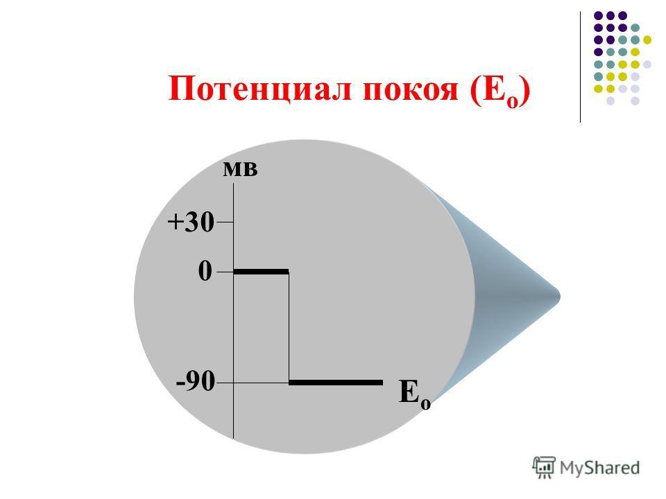 Потенциал покоя (Е о ) 0 -90 +30 мв ЕоЕо