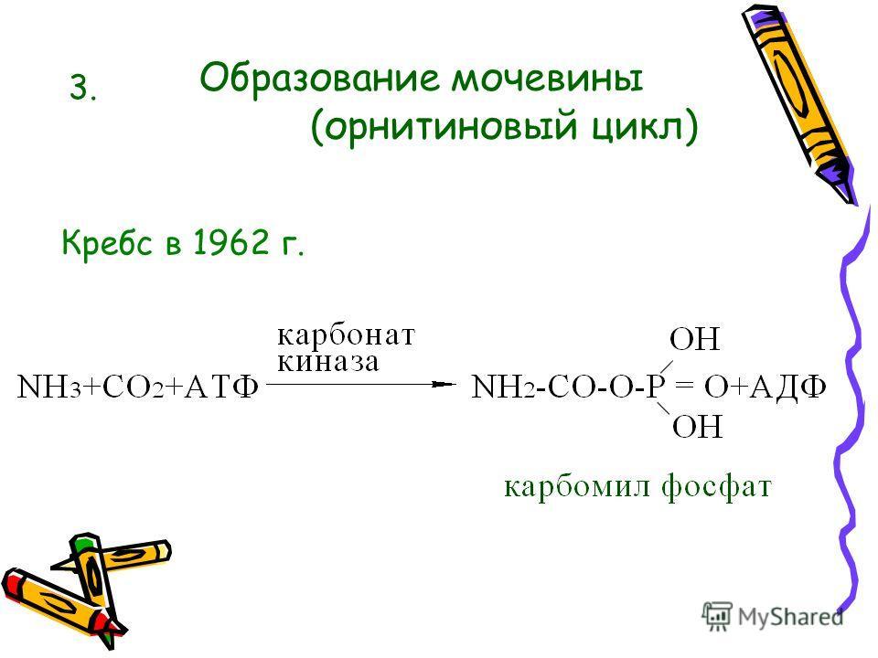 Пути связывания аммиака в организме 2. Образование амидов 1. Образование солей