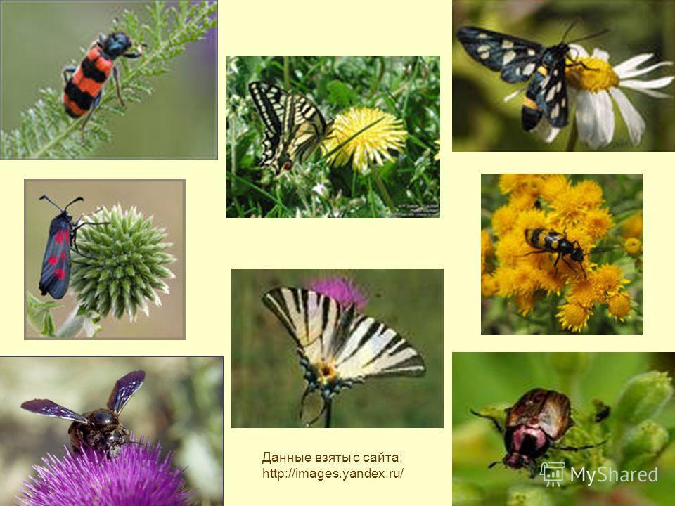 Данные взяты с сайта: http://images.yandex.ru/