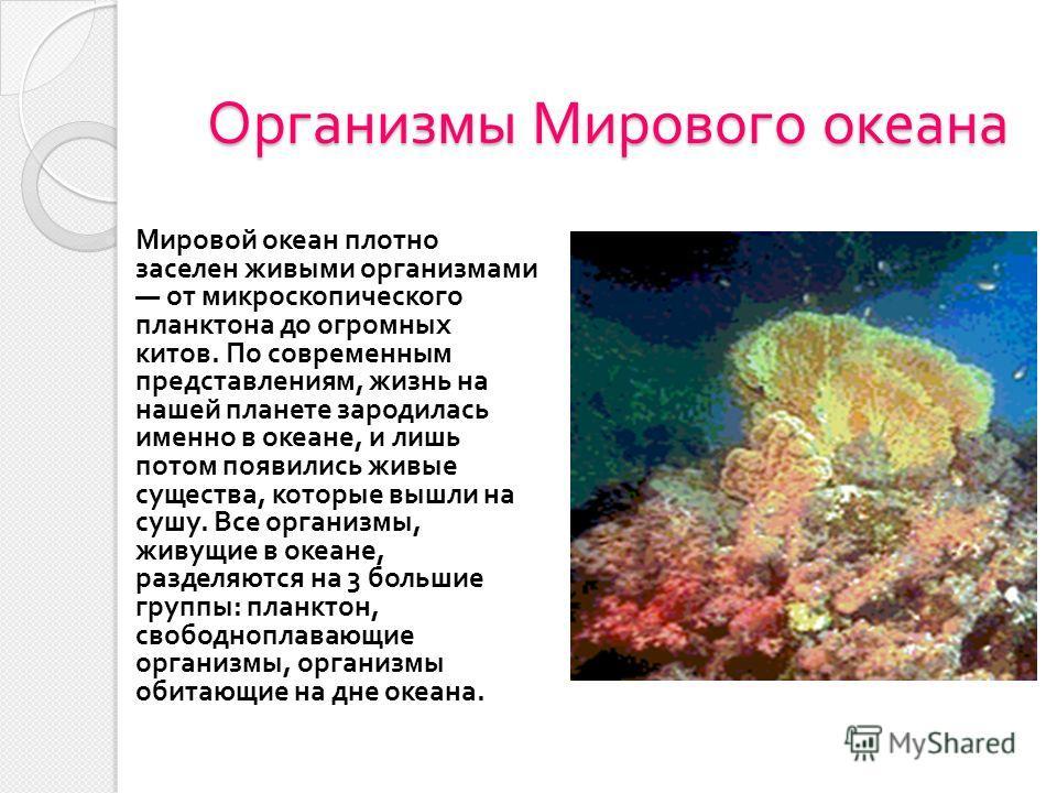 Организмы Мирового океана Мировой океан плотно заселен живыми организмами от микроскопического планктона до огромных китов. По современным представлениям, жизнь на нашей планете зародилась именно в океане, и лишь потом появились живые существа, котор