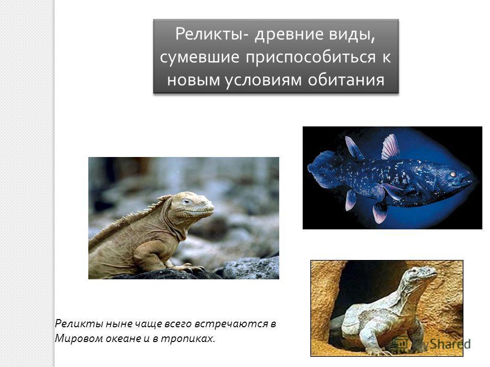 Реликты - древние виды, сумевшие приспособиться к новым условиям обитания Реликты ныне чаще всего встречаются в Мировом океане и в тропиках.