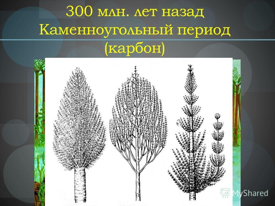 300 млн. лет назад Каменноугольный период (карбон)