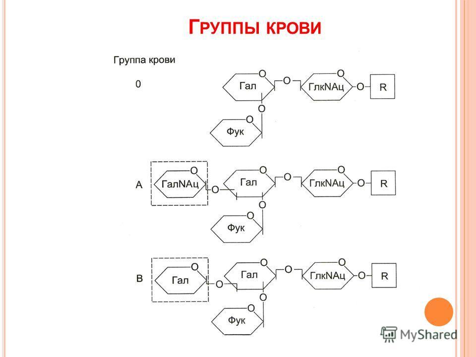 Г РУППЫ КРОВИ