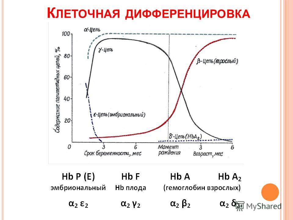 К ЛЕТОЧНАЯ ДИФФЕРЕНЦИРОВКА