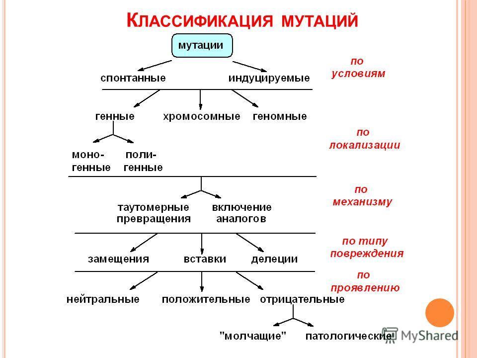 К ЛАССИФИКАЦИЯ МУТАЦИЙ