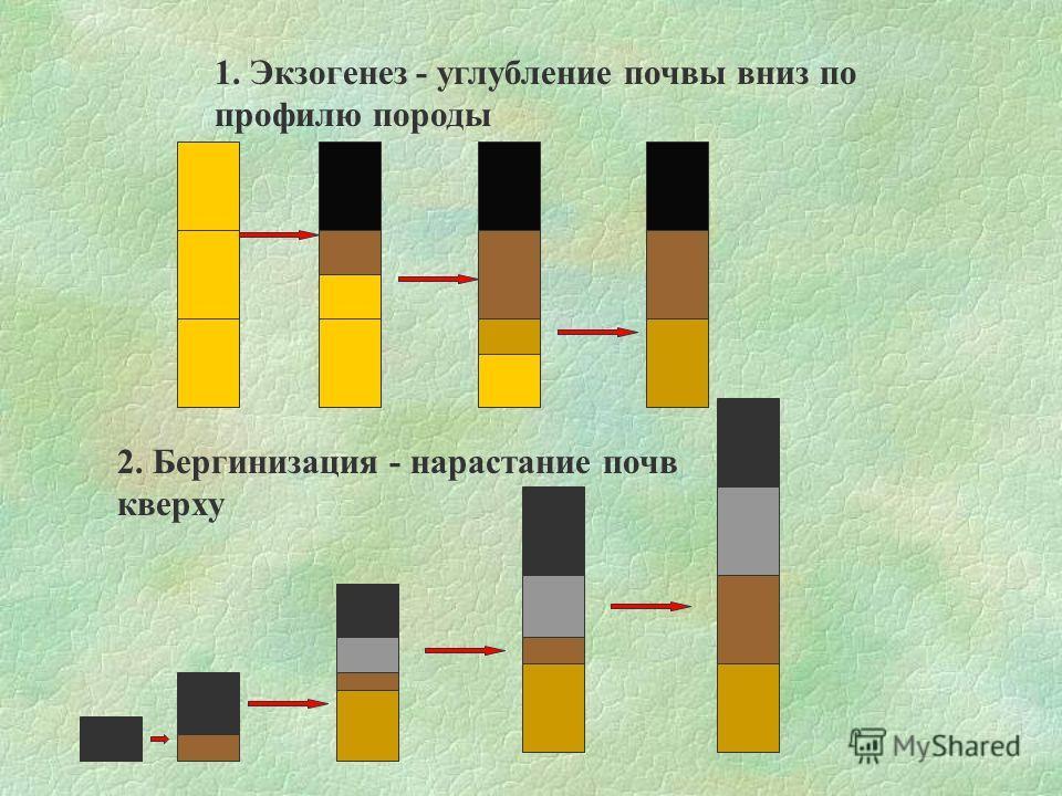 1. Экзогенез - углубление почвы вниз по профилю породы 2. Бергинизация - нарастание почв кверху