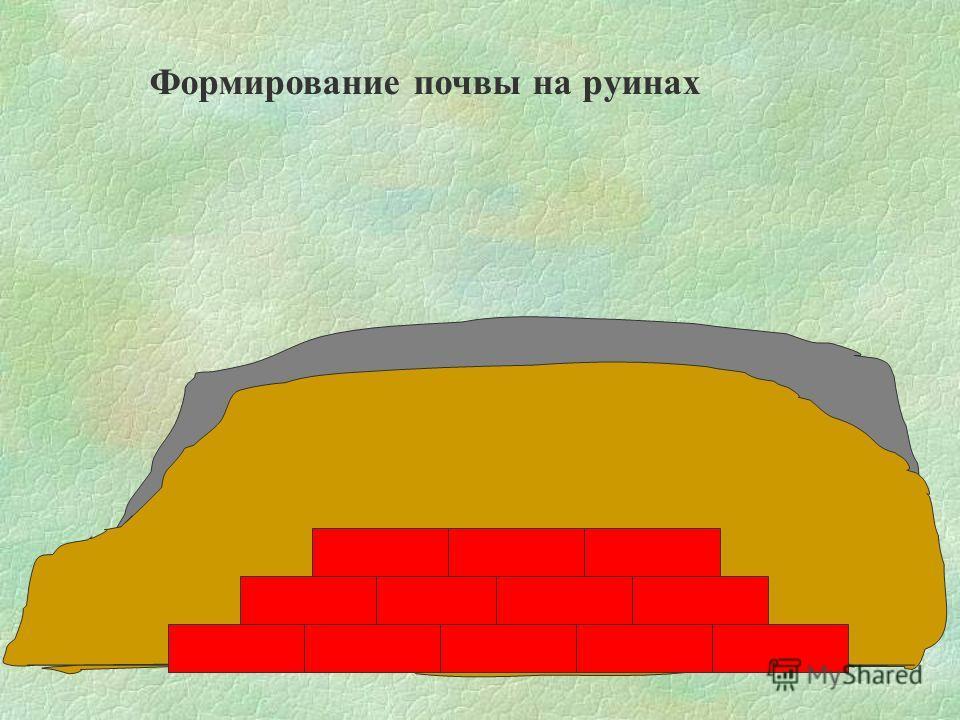 Формирование почвы на руинах