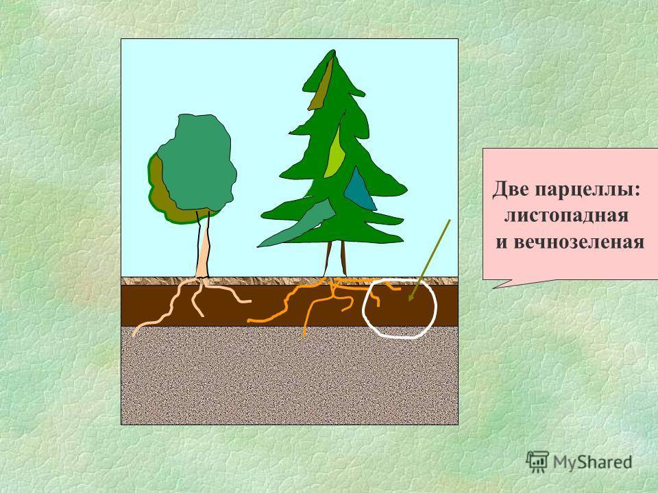 Две парцеллы: листопадная и вечнозеленая