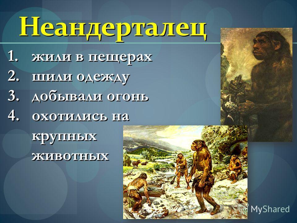 Неандерталец 1.жили в пещерах 2.шили одежду 3.добывали огонь 4.охотились на крупных животных 1.жили в пещерах 2.шили одежду 3.добывали огонь 4.охотились на крупных животных