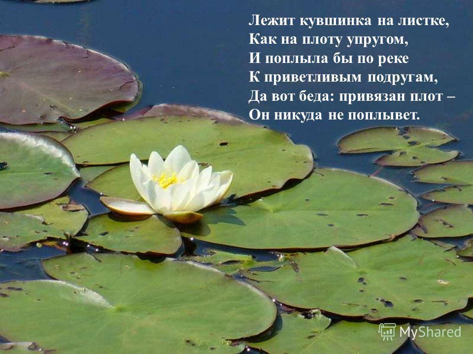 Лежит кувшинка на листке, Как на плоту упругом, И поплыла бы по реке К приветливым подругам, Да вот беда: привязан плот – Он никуда не поплывет.