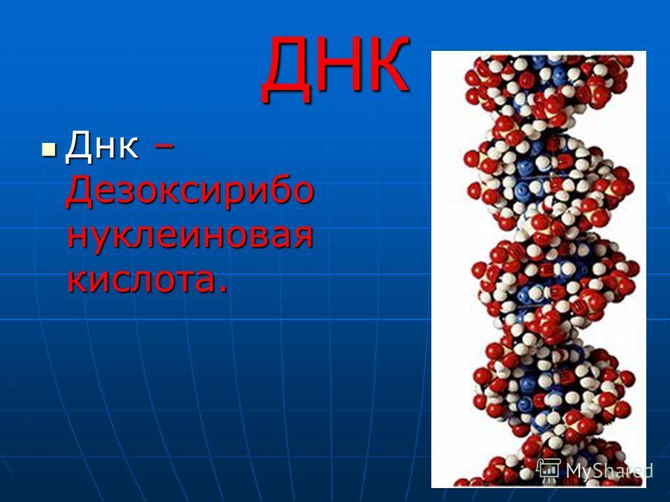 ДНК Днк – Дезоксирибо нуклеиновая кислота. Днк – Дезоксирибо нуклеиновая кислота.