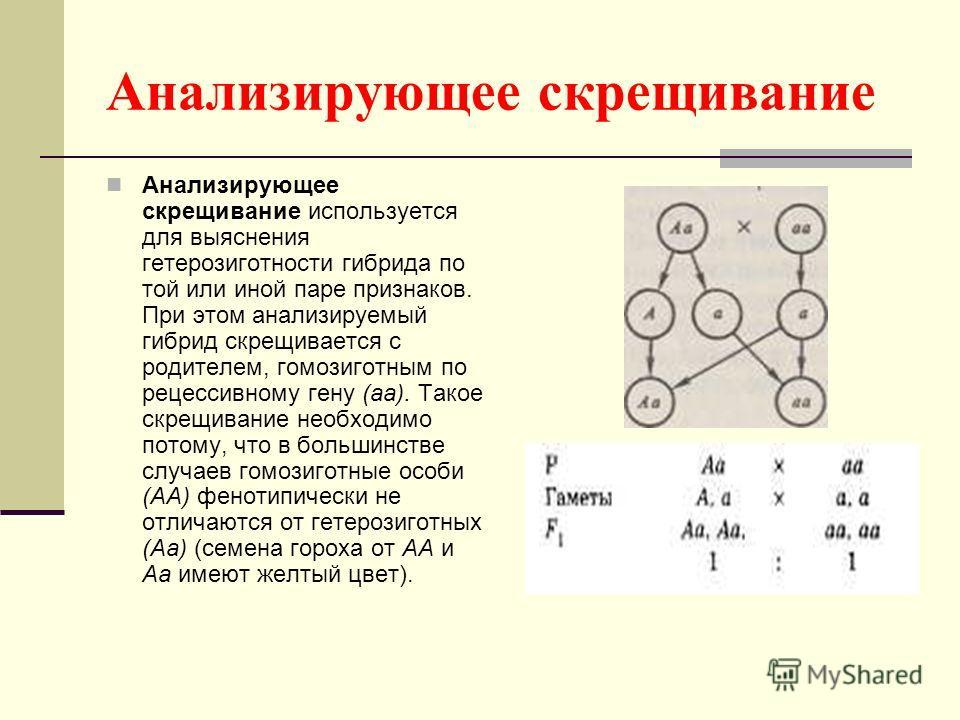 Анализирующее скрещивание Анализирующее скрещивание используется для выяснения гетерозиготности гибрида по той или иной паре признаков. При этом анализируемый гибрид скрещивается с родителем, гомозиготным по рецессивному гену (аа). Такое скрещивание