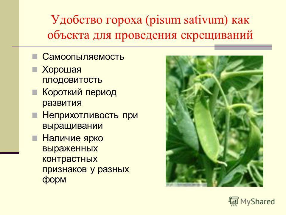 Удобство гороха (pisum sativum) как объекта для проведения скрещиваний Самоопыляемость Хорошая плодовитость Короткий период развития Неприхотливость при выращивании Наличие ярко выраженных контрастных признаков у разных форм
