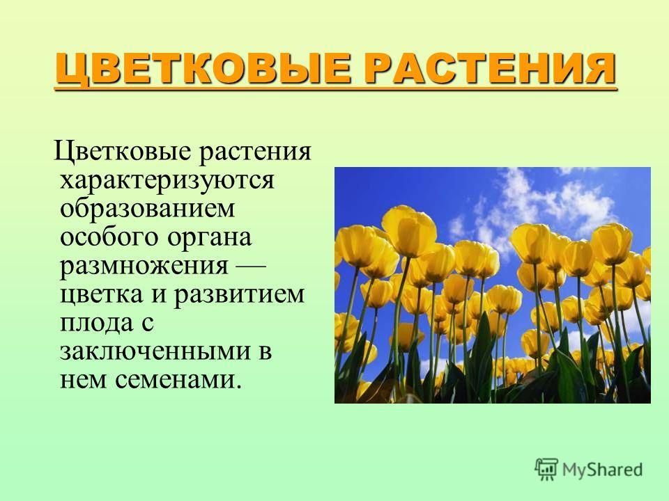 строение цветов картинки:
