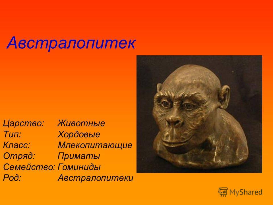 Царство:Животные Тип: Хордовые Класс: Млекопитающие Отряд:Приматы Семейство:Гоминиды Род: Австралопитеки Австралопитек