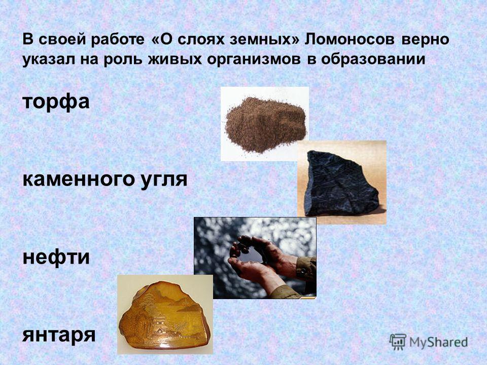 В своей работе «О слоях земных» Ломоносов верно указал на роль живых организмов в образовании торфа каменного угля нефти янтаря