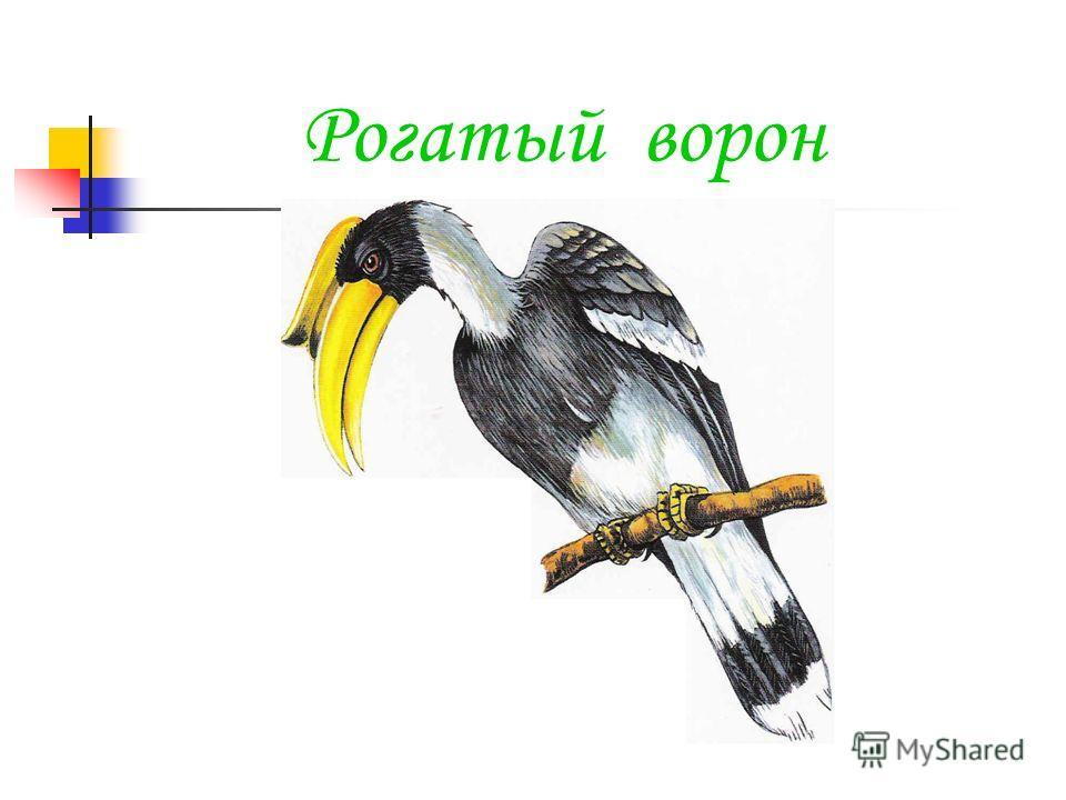 Рогатый ворон