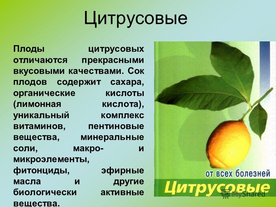 Цитрусовые Плоды цитрусовых отличаются прекрасными вкусовыми качествами. Сок плодов содержит сахара, органические кислоты (лимонная кислота), уникальный комплекс витаминов, пентиновые вещества, минеральные соли, макро- и микроэлементы, фитонциды, эфи