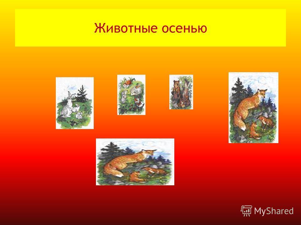 Животные осенью