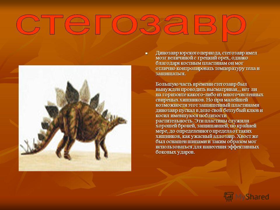 Динозавр юрского периода, стегозавр имел мозг величиной с грецкий орех, однако благодаря костным пластинам он мог отлично контролировать температуру тела и защищаться. Большую часть времени стегозавр был вынужден проводить высматривая,, нет ли на гор