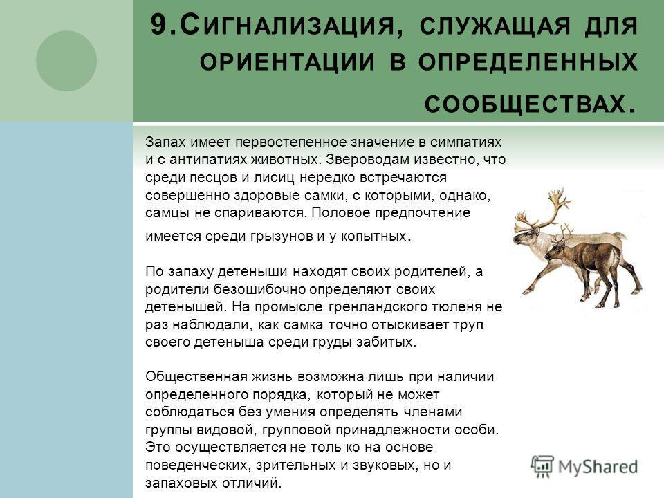 9.С ИГНАЛИЗАЦИЯ, СЛУЖАЩАЯ ДЛЯ ОРИЕНТАЦИИ В ОПРЕДЕЛЕННЫХ СООБЩЕСТВАХ. Запах имеет первостепенное значение в симпатиях и с антипатиях животных. Звероводам известно, что среди песцов и лисиц нередко встречаются совершенно здоровые самки, с которыми, одн