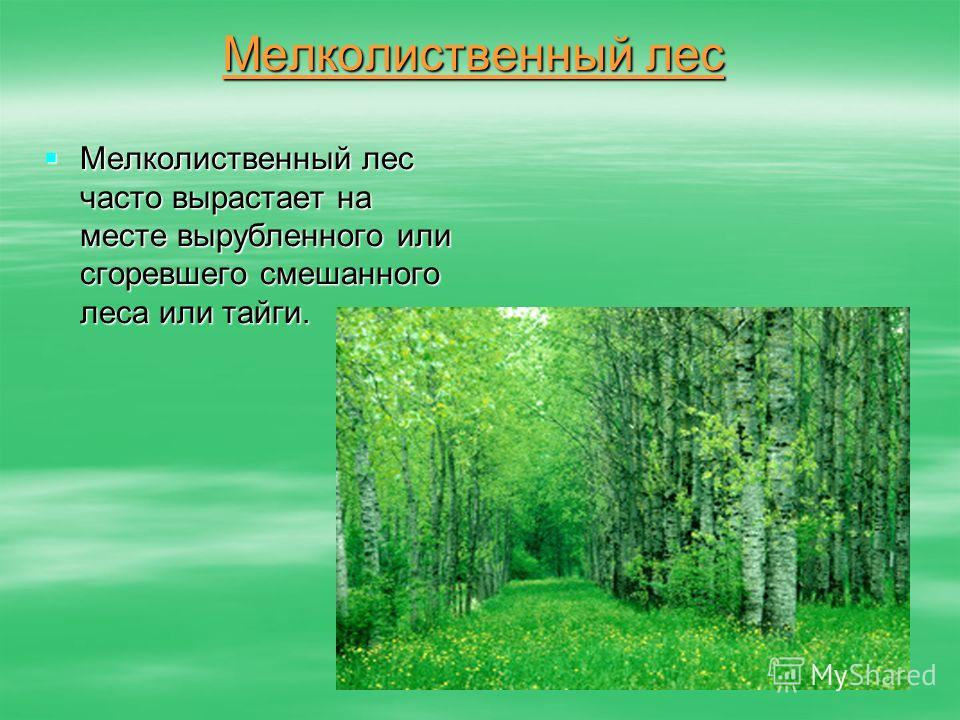 Мелколиственный лес Мелколиственный лес часто вырастает на месте вырубленного или сгоревшего смешанного леса или тайги. Мелколиственный лес часто вырастает на месте вырубленного или сгоревшего смешанного леса или тайги.