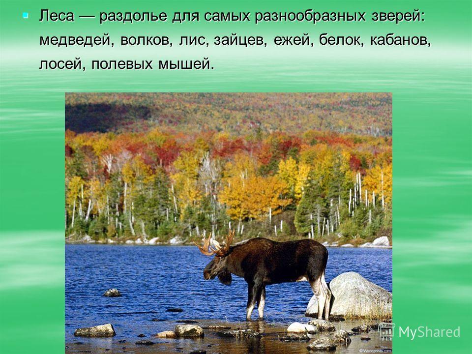 Леса раздолье для самых разнообразных зверей: медведей, волков, лис, зайцев, ежей, белок, кабанов, лосей, полевых мышей. Леса раздолье для самых разнообразных зверей: медведей, волков, лис, зайцев, ежей, белок, кабанов, лосей, полевых мышей.