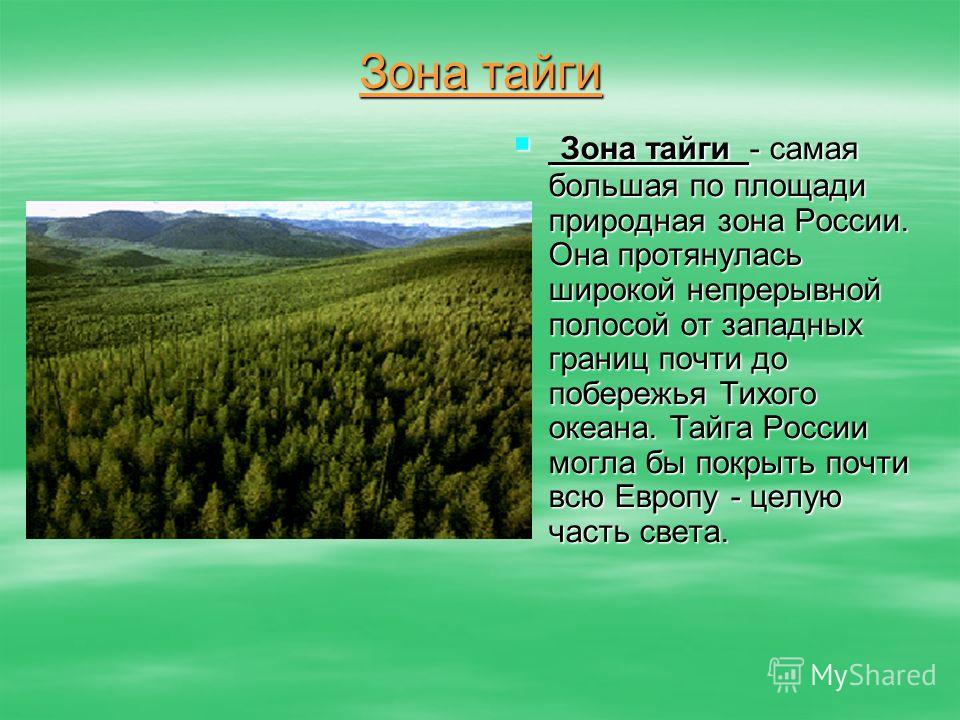 Зона тайги - самая большая по площади природная зона России. Она протянулась широкой непрерывной полосой от западных границ почти до побережья Тихого океана. Тайга России могла бы покрыть почти всю Европу - целую часть света. Зона тайги - самая больш