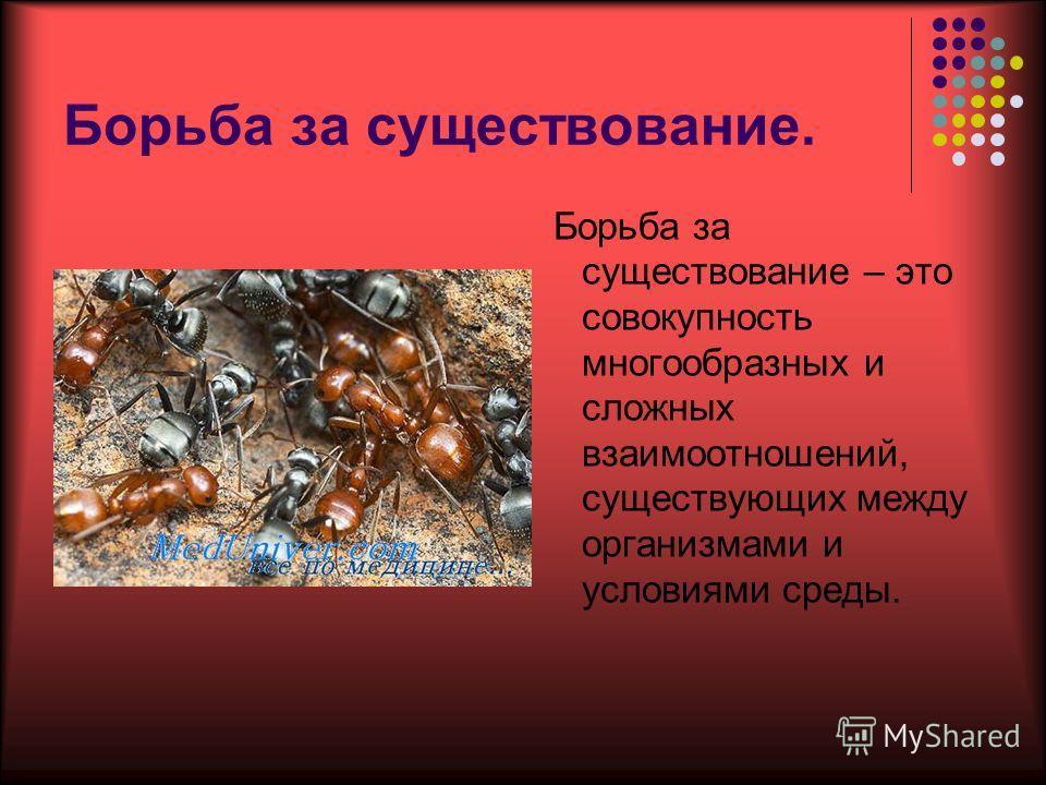 Борьба за существование. Борьба за существование – это совокупность многообразных и сложных взаимоотношений, существующих между организмами и условиями среды.