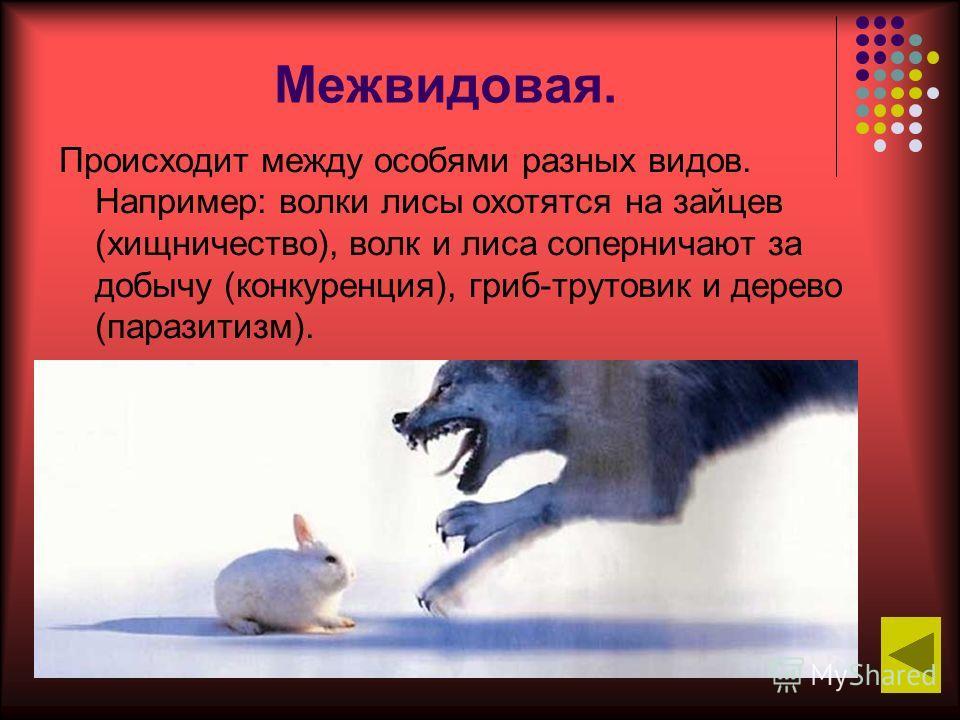 Межвидовая. Происходит между особями разных видов. Например: волки лисы охотятся на зайцев (хищничество), волк и лиса соперничают за добычу (конкуренция), гриб-трутовик и дерево (паразитизм).