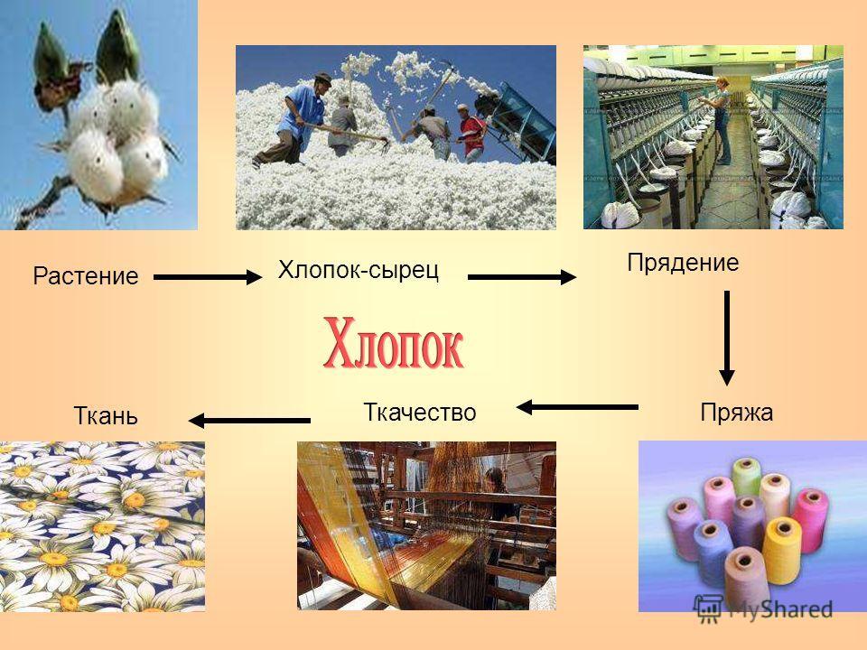 Растение Хлопок-сырец Прядение ПряжаТкачество Ткань