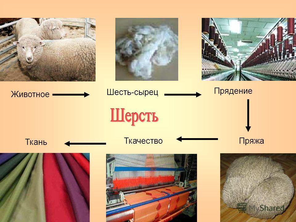 Животное Шесть-сырец Прядение ПряжаТкачество Ткань