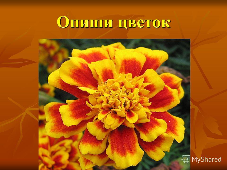 Опиши цветок