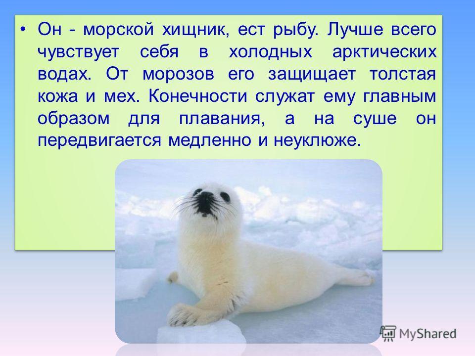 Он - морской хищник, ест рыбу. Лучше всего чувствует себя в холодных арктических водах. От морозов его защищает толстая кожа и мех. Конечности служат ему главным образом для плавания, а на суше он передвигается медленно и неуклюже.