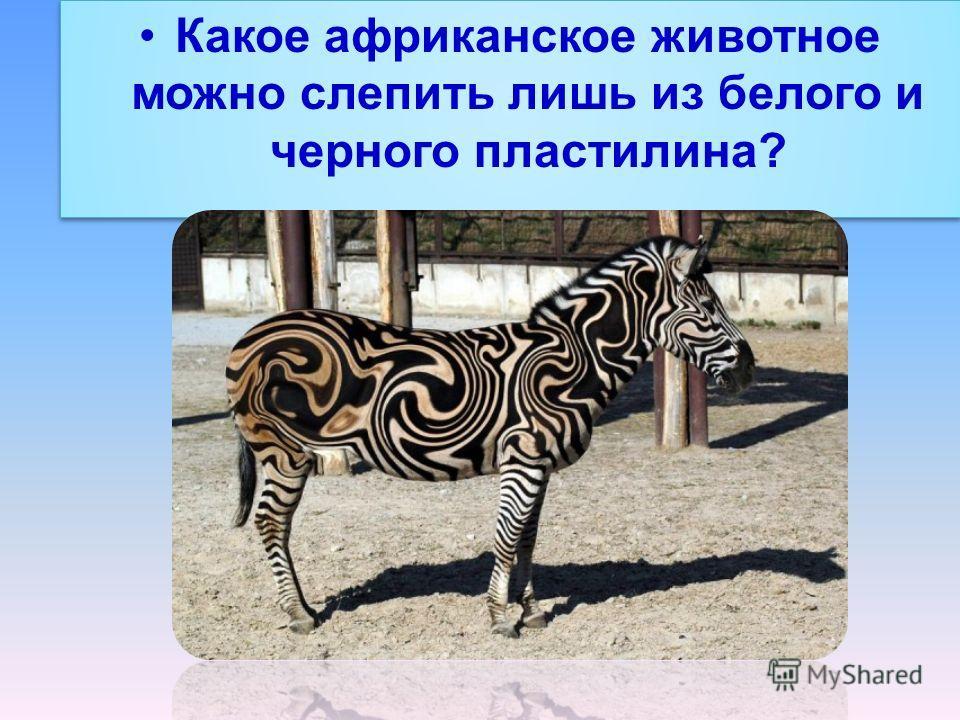 Какое африканское животное можно слепить лишь из белого и черного пластилина?