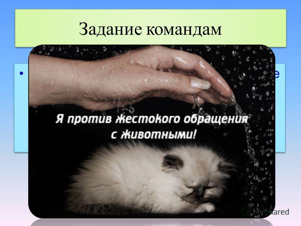 Задание командам Нарисуйте небольшой плакат на листке А4 под названием Я против жестокого обращения с животными! Нарисуйте небольшой плакат на листке А4 под названием Я против жестокого обращения с животными!