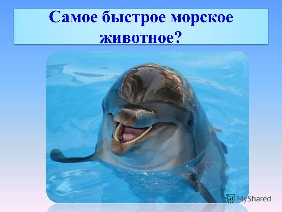 Самое быстрое морское животное?