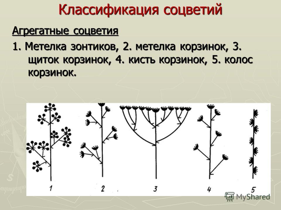 Классификация соцветий Агрегатные соцветия 1. Метелка зонтиков, 2. метелка корзинок, 3. щиток корзинок, 4. кисть корзинок, 5. колос корзинок.