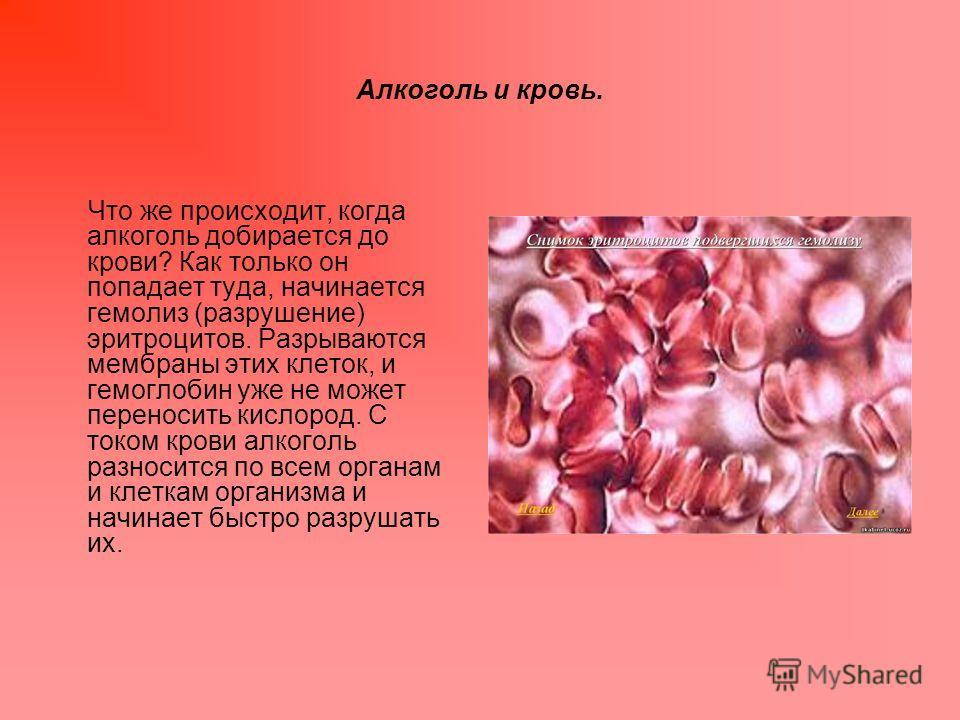 Алкоголь и кровь. Что же происходит, когда алкоголь добирается до крови? Как только он попадает туда, начинается гемолиз (разрушение) эритроцитов. Разрываются мембраны этих клеток, и гемоглобин уже не может переносить кислород. С током крови алкоголь