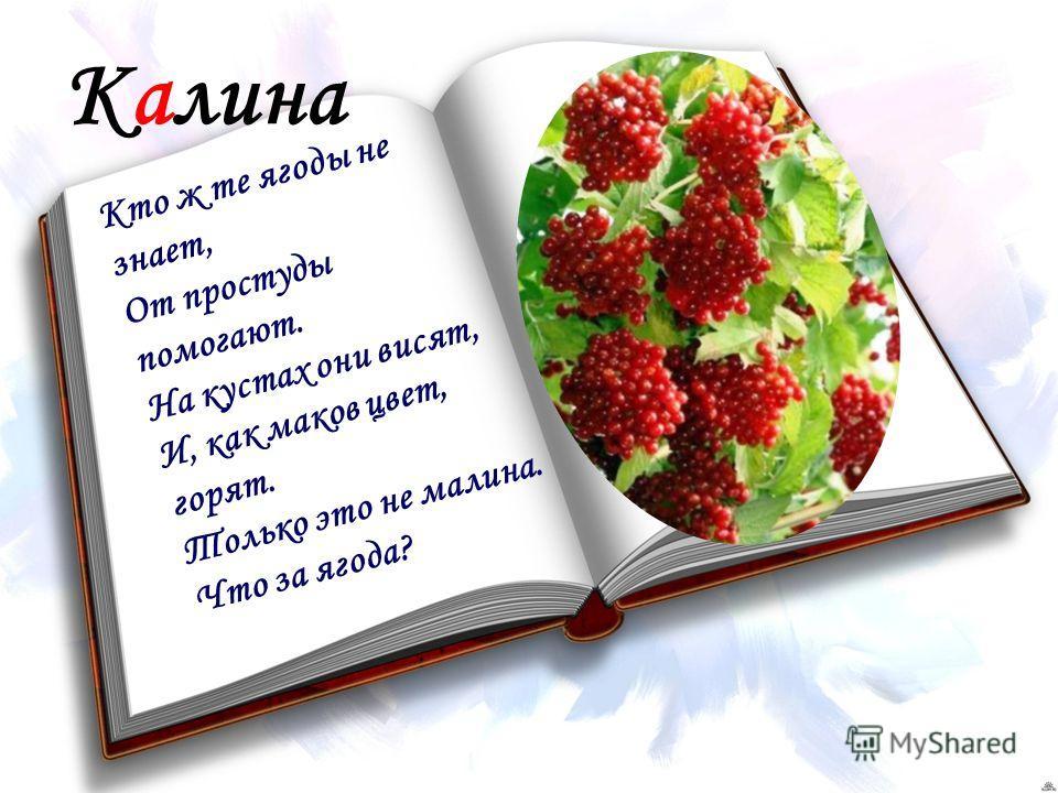 Калина Кто ж те ягоды не знает, От простуды помогают. На кустах они висят, И, как маков цвет, горят. Только это не малина. Что за ягода?