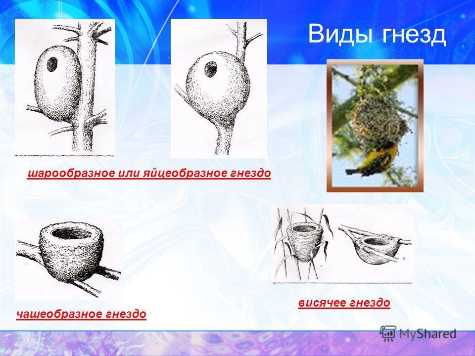 Виды гнезд чашеобразное гнездо шарообразное или яйцеобразное гнездо висячее гнездо