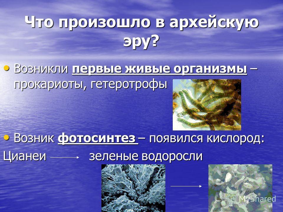 Что произошло в архейскую эру? Возникли первые живые организмы – прокариоты, гетеротрофы Возникли первые живые организмы – прокариоты, гетеротрофы Возник фотосинтез – появился кислород: Возник фотосинтез – появился кислород: Цианеи зеленые водоросли