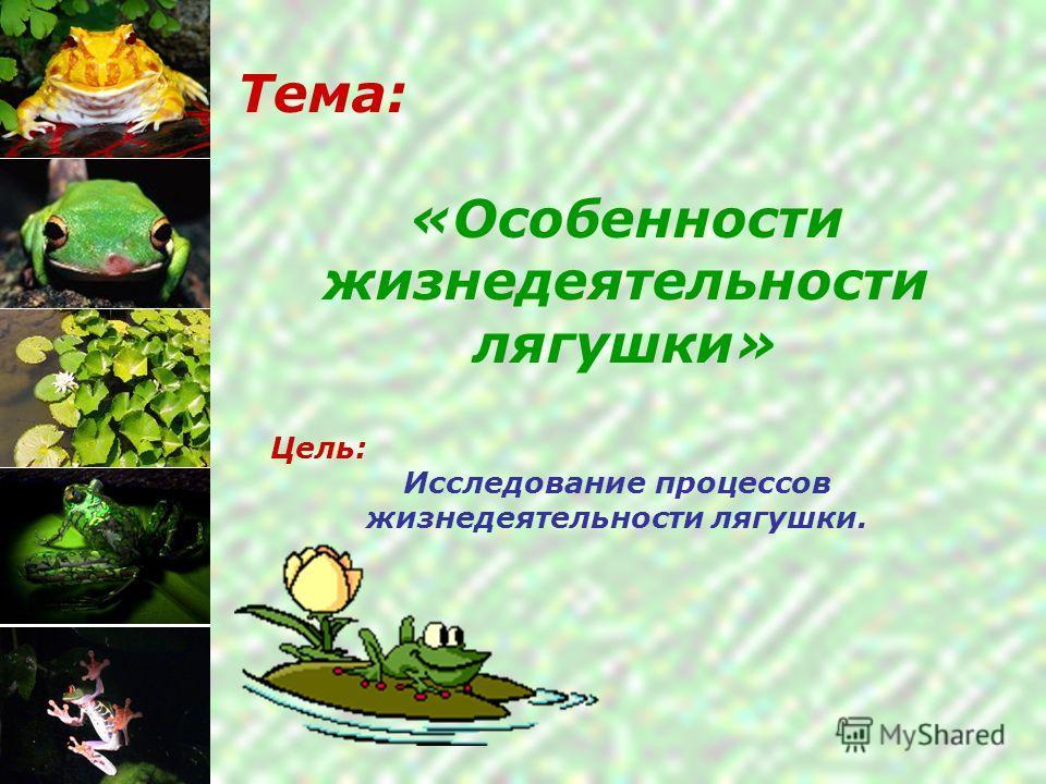 Тема: «Особенности жизнедеятельности лягушки» Цель: Исследование процессов жизнедеятельности лягушки.