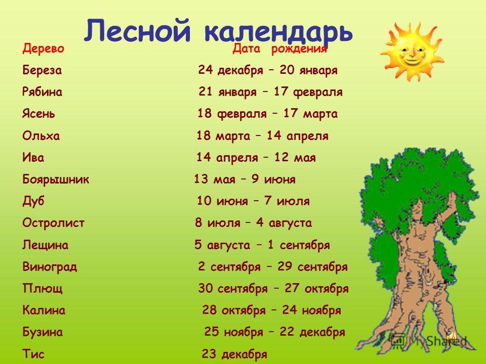 Лесной календарь Дерево Дата рождения Береза 24 декабря – 20 января Рябина 21 января – 17 февраля Ясень 18 февраля – 17 марта Ольха 18 марта – 14 апреля Ива 14 апреля – 12 мая Боярышник 13 мая – 9 июня Дуб 10 июня – 7 июля Остролист 8 июля – 4 август