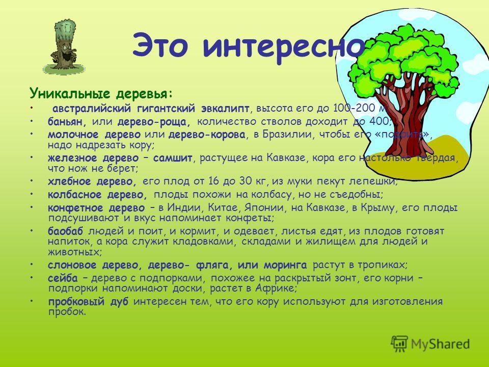 Это интересно Уникальные деревья: австралийский гигантский эвкалипт, высота его до 100-200 м; баньян, или дерево-роща, количество стволов доходит до 400; молочное дерево или дерево-корова, в Бразилии, чтобы его «подоить», надо надрезать кору; железно