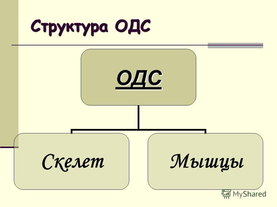Структура ОДС ОДС СкелетМышцы