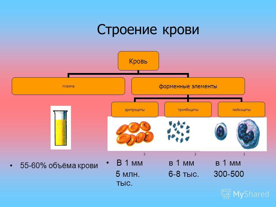 Кровь плазма форменные элементы эритроцитытромбоцитылейкоциты 55-60% объёма крови 3 3 3 В 1 мм в 1 мм в 1 мм 5 млн. 6-8 тыс. 300-500 тыс. Строение крови